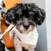 FosterDogs_DiscoveryPuppyParty_20180326_4890_©StaceyAxelrod
