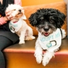 FosterDogs_DiscoveryPuppyParty_20180326_4962_©StaceyAxelrod