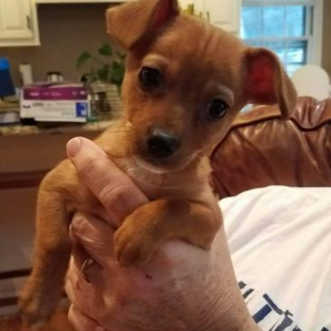 Tinkerbell~ The Little Chi Fairy