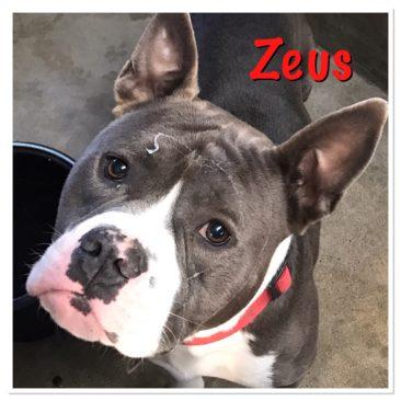 Zeus~ Mythical Slobber God