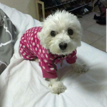 Maddie~ A Little Diva Princess